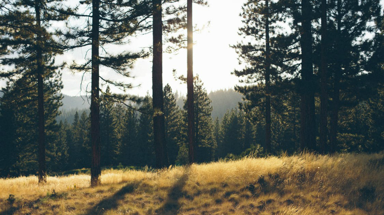 Campanya Forestal 2020